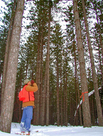 Properly managed UP timber sales assure sound forestry practices while obtaining the highest dollar value for your forest products.