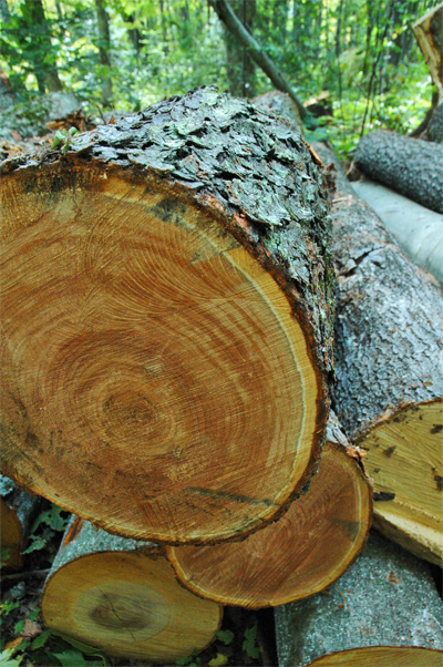 Upper Peninsula Timber Sales, Timber Marketing, Top 10 List