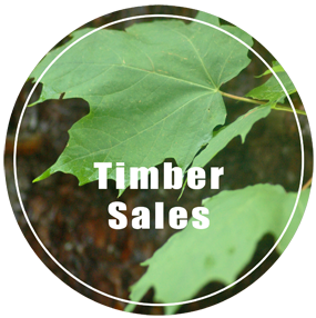 UP Timber Sales - Timber Sales in Michigan's Upper Peninsula